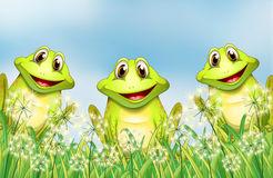 três-rãs-felizes-no-jardim-30350060